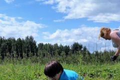 praca-truskawki-2